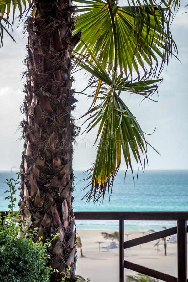 Palm at the Praia de Chaves. Boa Vista, Cape Verde stock image