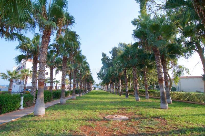 Palm promenade in Ayia Napa stock photo