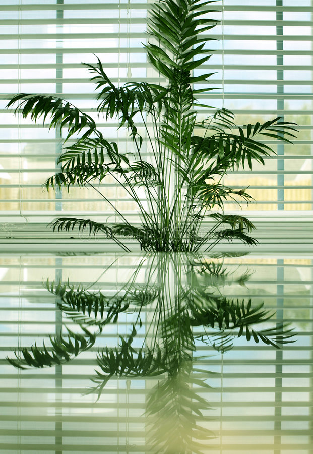 Palm Reflections 1 stock photography