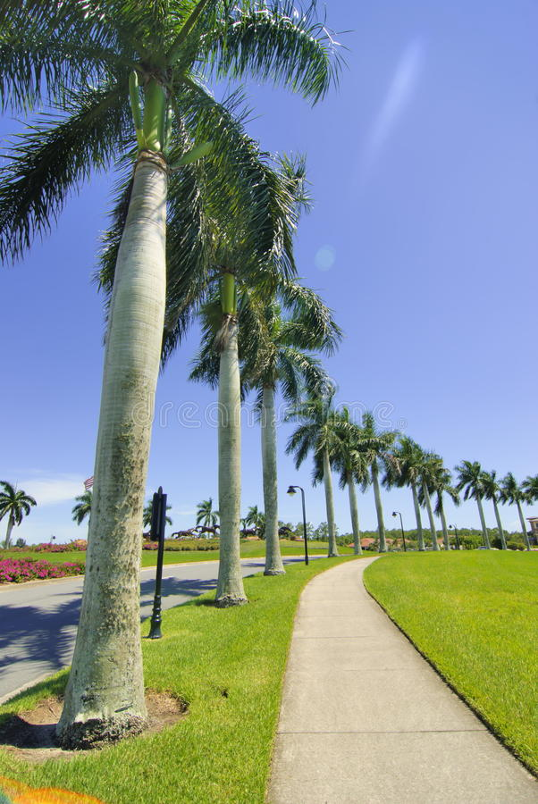 Palm road royalty free stock photo