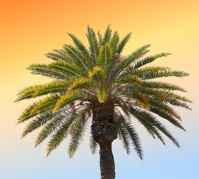 palm słońca zdjęcia royalty free