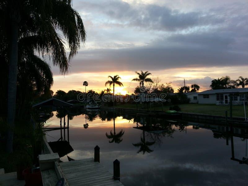 palm słońca obrazy royalty free