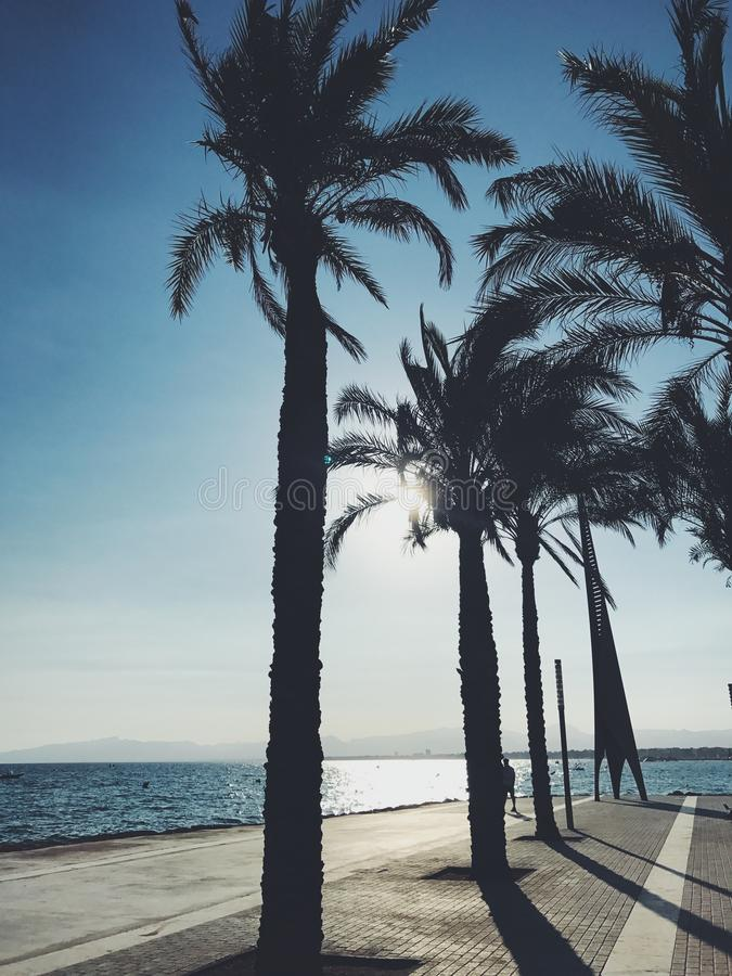 Palm in Salou royalty free stock image