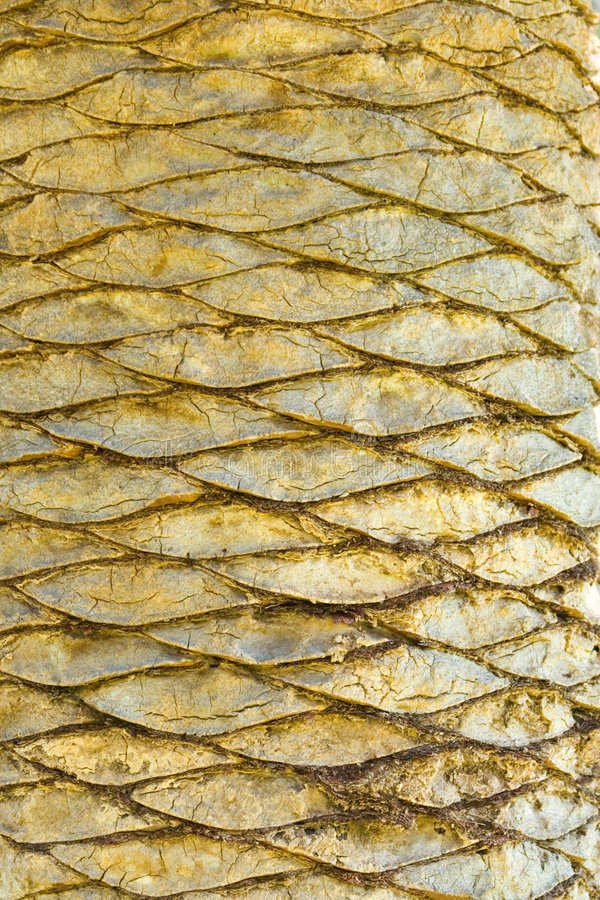 Free Palm Scales Royalty Free Stock Photography - 4611157