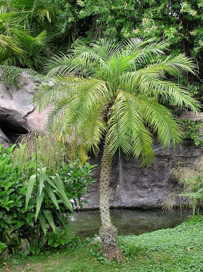 Free Palm Scene Stock Image - 696131
