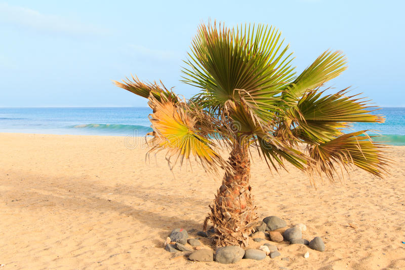 Palm And Sea Royalty Free Stock Photography