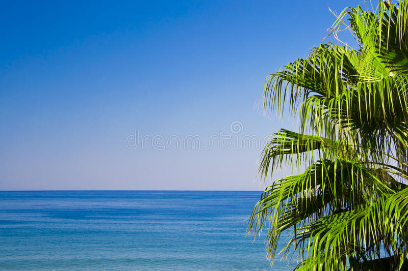 Download Palm with sea view stock photo. Image of seascape, palm - 27273850