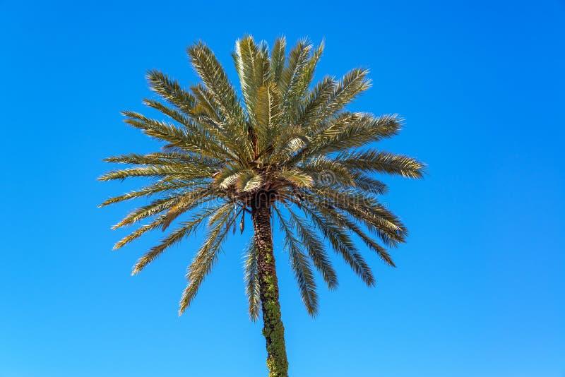 Palm in Sevilla, Spanje stock foto's