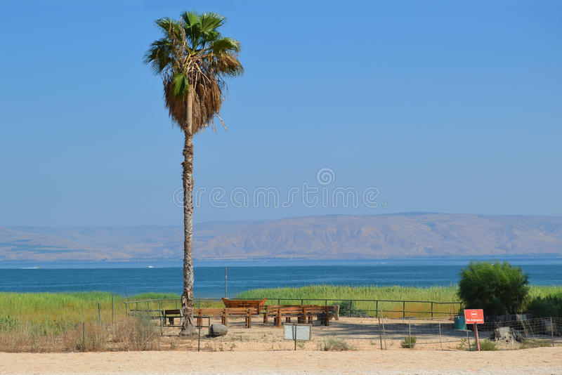 Palm on the shore stock photography