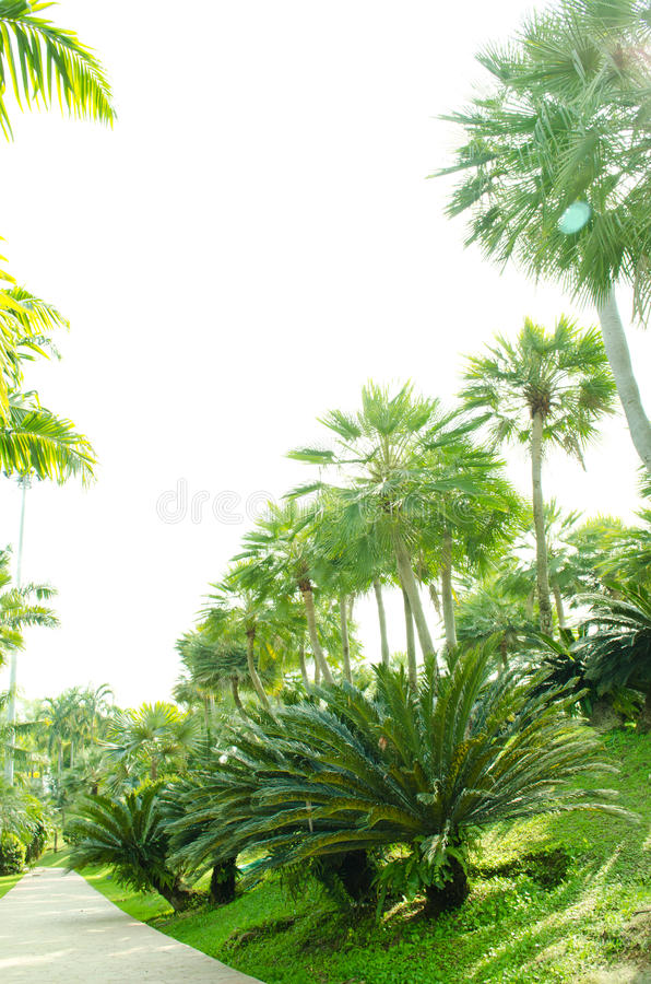 Download Palm  Show In Royal Flora 2011 At Chiangmai. Stock Image - Image: 22837195