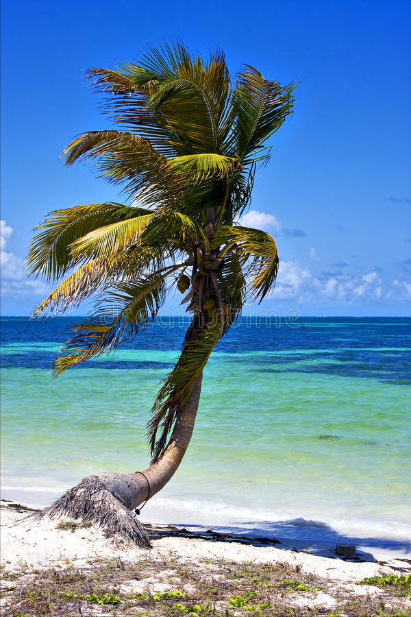A palm in sian kaan lagoon mexico royalty free stock image