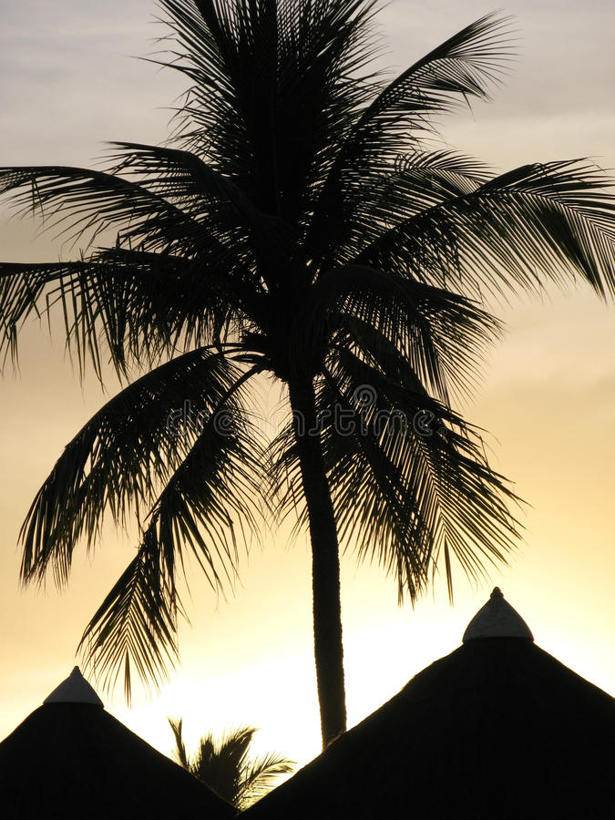 Download Palm Silhouette stock photo. Image of light, thatch, salvador - 11501790