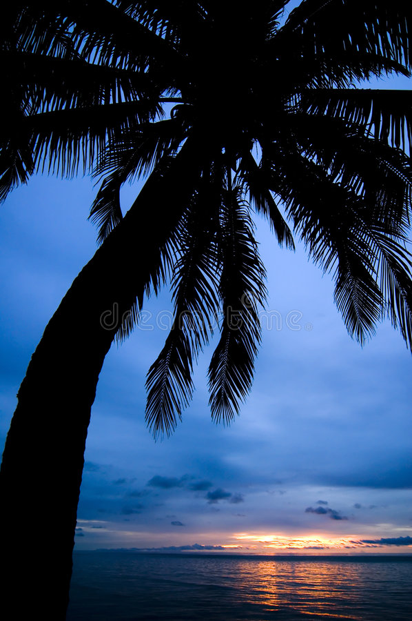 Free Palm Silhouette Stock Photos - 7849553