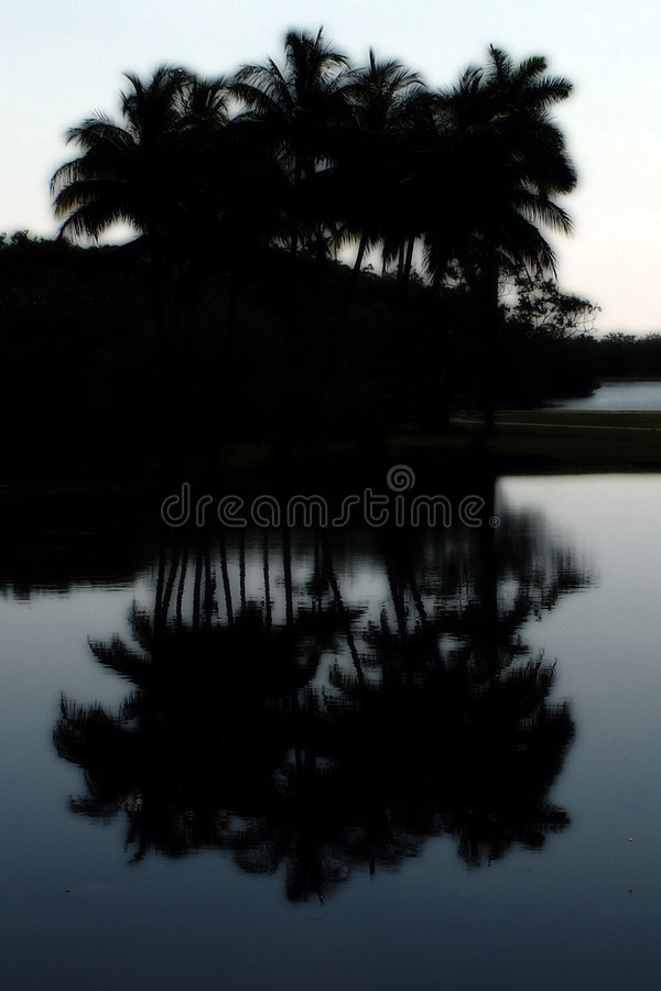 Download Palm Silhouette And Reflection Stock Image - Image of dusk, sunrise: 235043