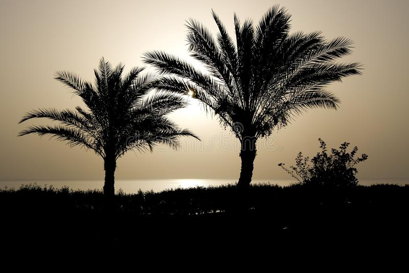 Palm silhouettes at sunrise royalty free stock photography