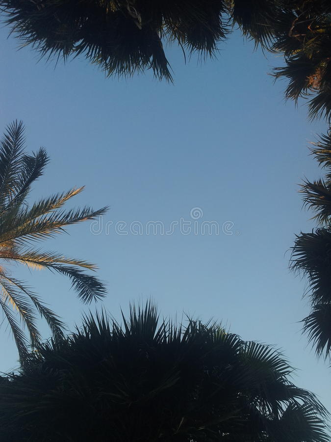 Palm and sky. In Turkey royalty free stock photography