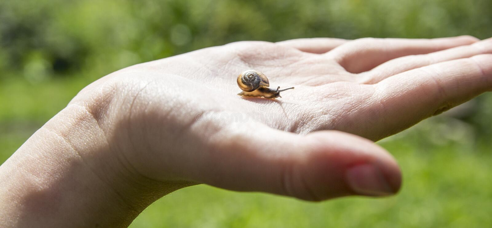 On the palm a small snail is crawling with beautiful horns and an orange shell house against a green forest and sky on a sunny day stock image