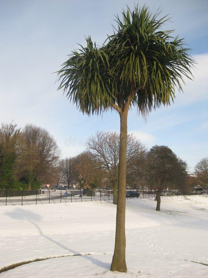 Palm in sneeuw, het Park van Phoenix, Dublin, Ierland royalty-vrije stock fotografie