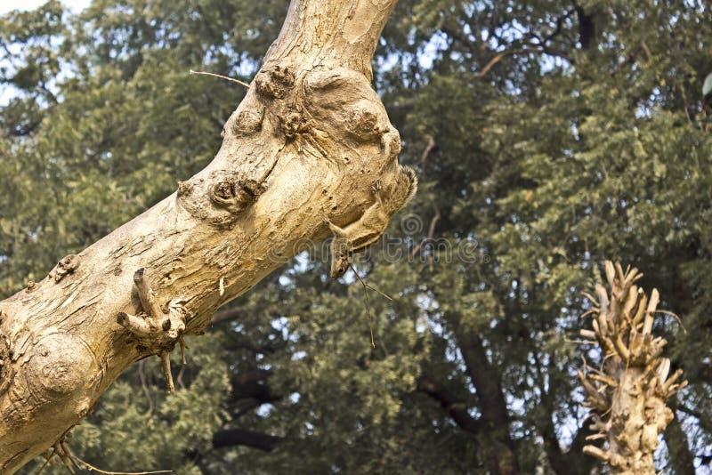 Palm squirrell stock photos