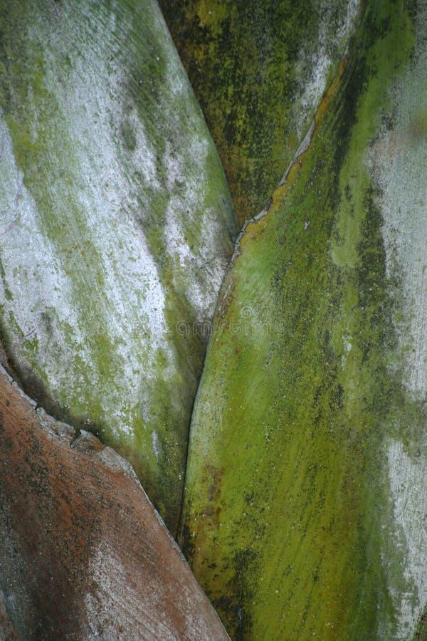 Download Palm Stalk stock photo. Image of close, botany, detail - 109508