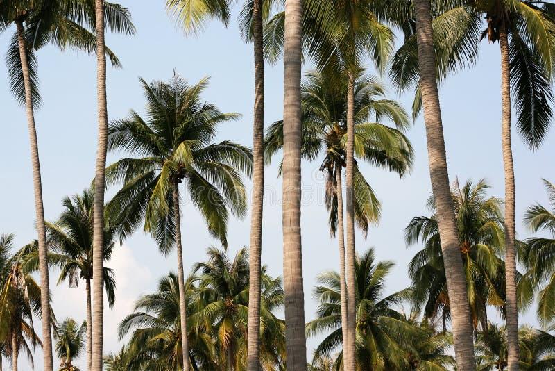 palm statywowi drzewa fotografia stock