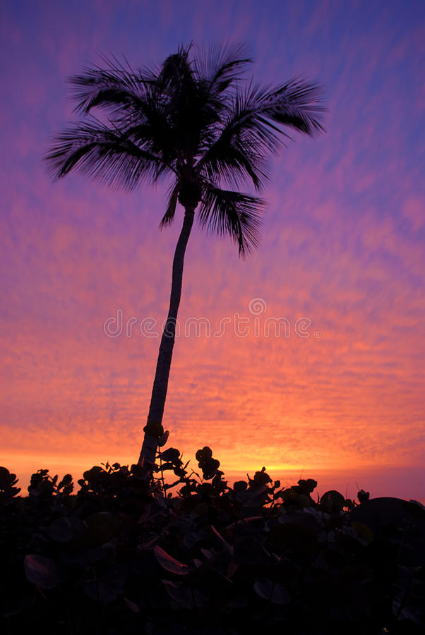 Download Palm at Sunset stock photo. Image of palm, tropics, sunset - 18024154