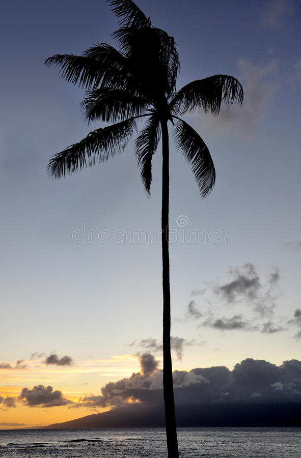 Palm at sunset royalty free stock photography