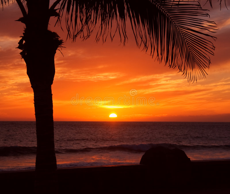 Palm and sunset stock photos