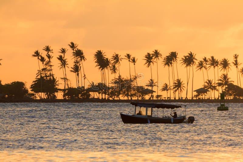 Palm sunset boat stock photos
