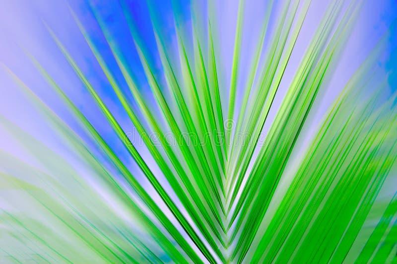 Palm sway stock photos