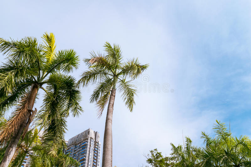 Palm tegen blauwe hemel royalty-vrije stock afbeelding