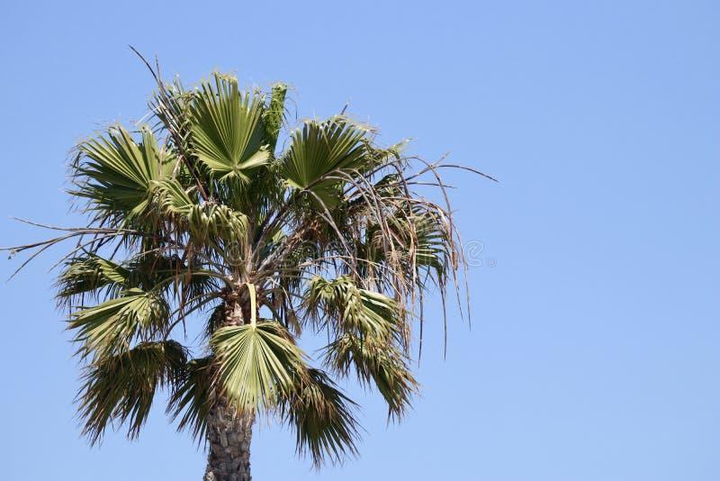 Palm tegen blauwe hemel royalty-vrije stock foto's