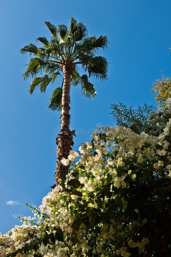 Palm tegen blauwe hemel bij Majorelle-tuin in Marrakech, Marokko stock foto