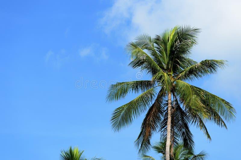 Palm tegen de blauwe hemel op een bewolkte dag royalty-vrije stock foto's