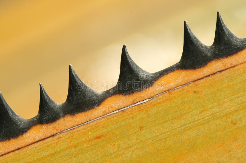 Palm Thorns royalty free stock photography