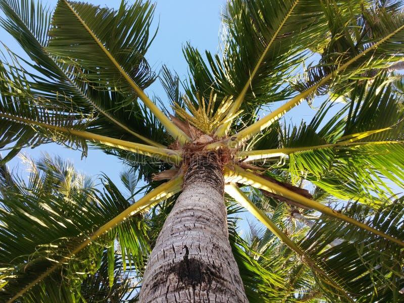 Palm Top royalty free stock photos