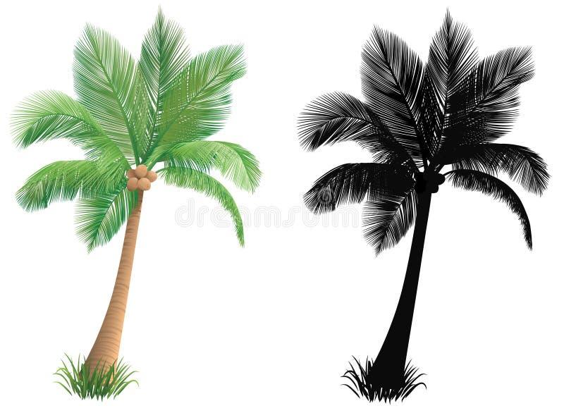 Palm tree. stock illustration