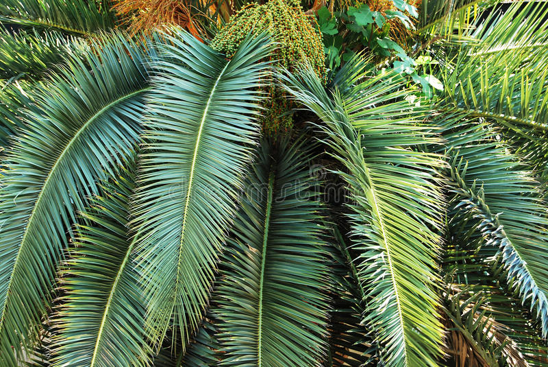 Download Palm tree stock photo. Image of coconut, bark, exotic - 11472764