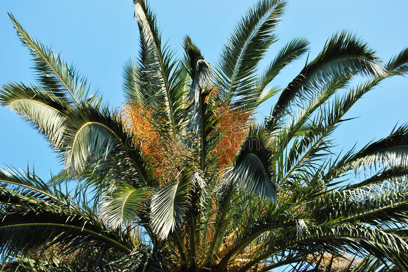 Download Palm tree stock image. Image of leaves, evergreen, holiday - 11473017