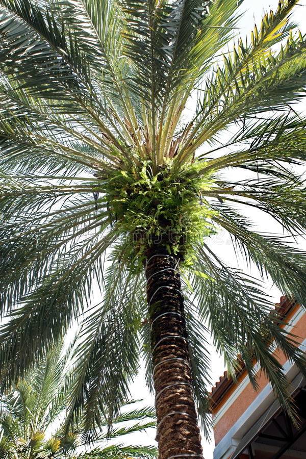 Download Palm Tree stock photo. Image of green, scenic, landscape - 11550500