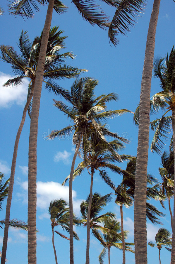 Free Palm Tree Stock Images - 1178264