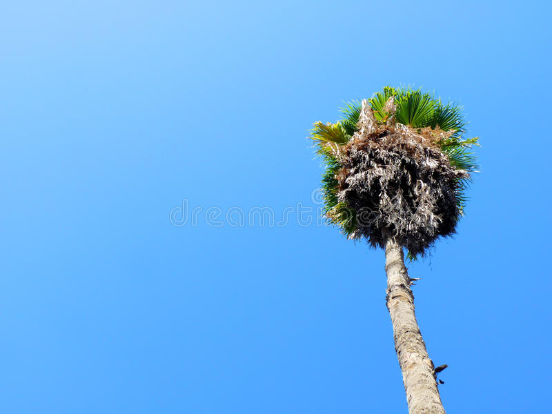 Download Palm Tree Royalty Free Stock Image - Image: 12454826