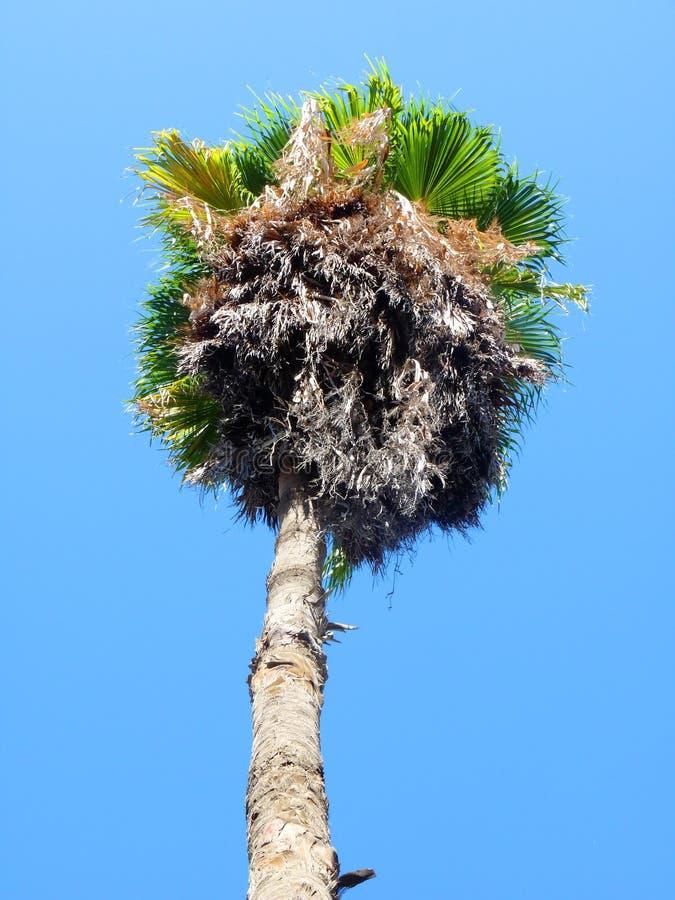 Download Palm Tree stock image. Image of scenery, coastal, high - 12454941
