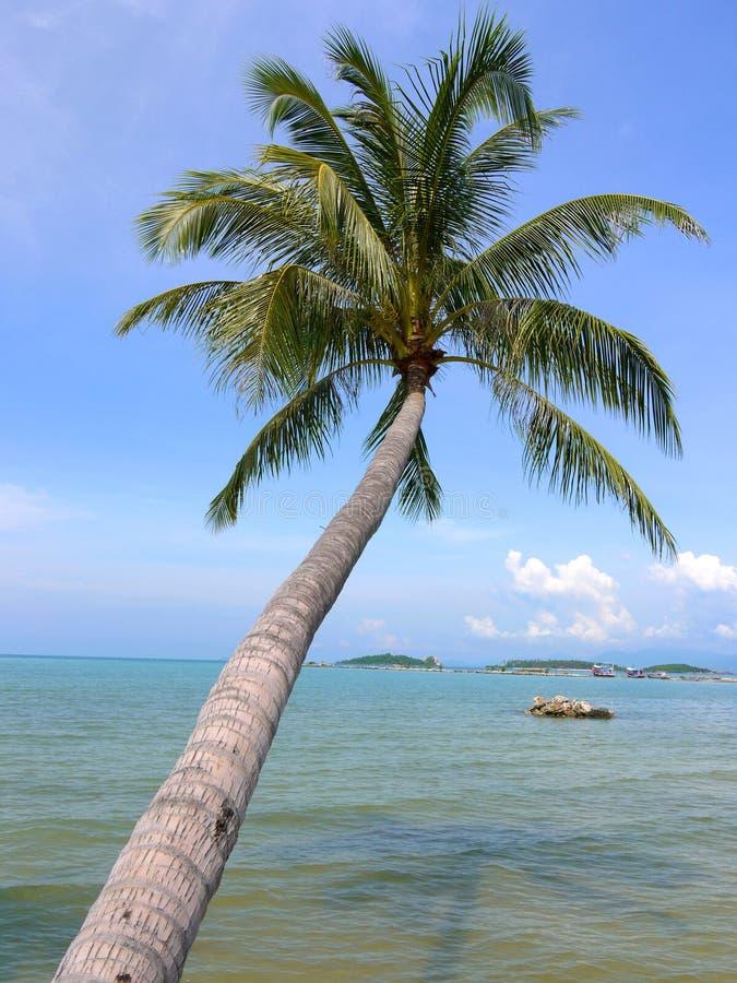 Palm Tree Royalty Free Stock Photo
