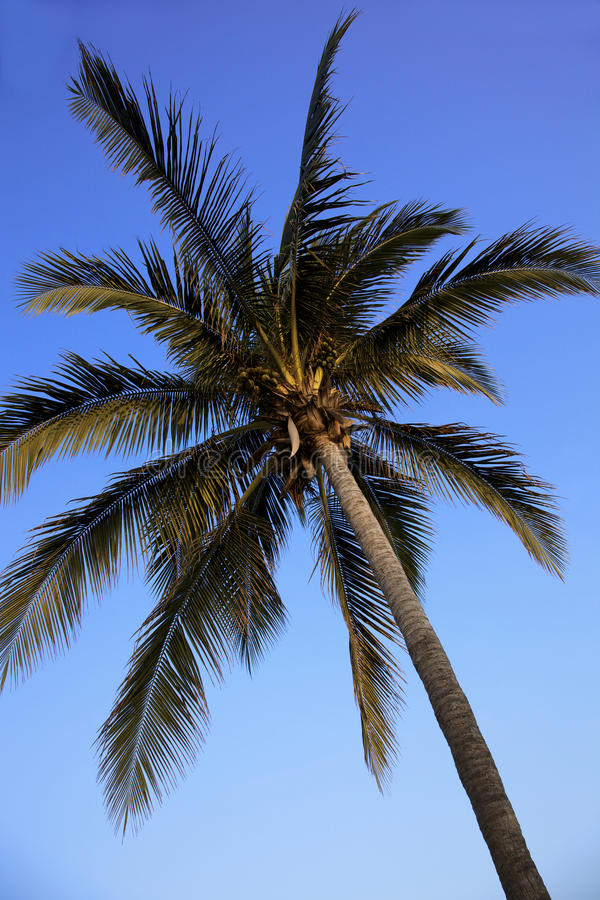 Free Palm Tree Stock Photography - 13612512