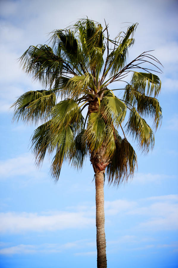 Free Palm Tree Royalty Free Stock Image - 14484676