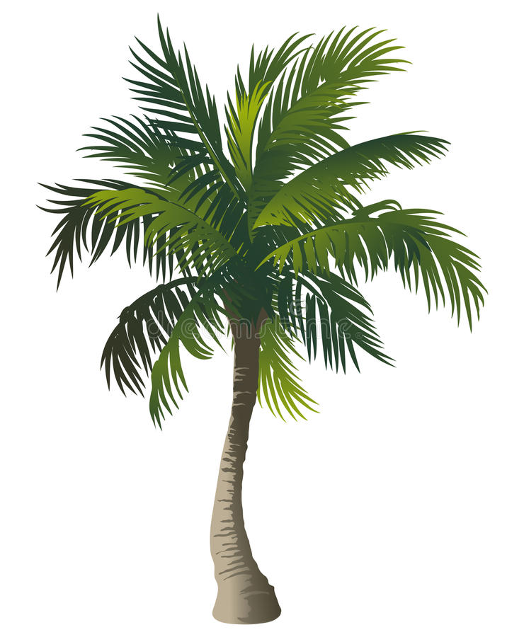 Download Palm tree stock vector. Image of leaves, green, tropical - 15312209