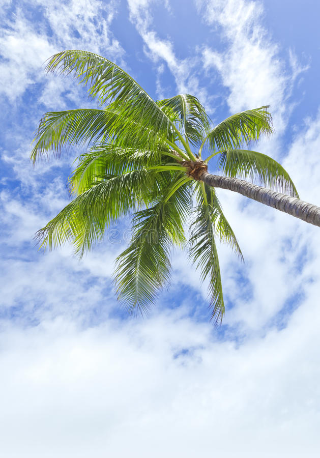 Download Palm tree stock photo. Image of blue, nature, tourism - 16115792