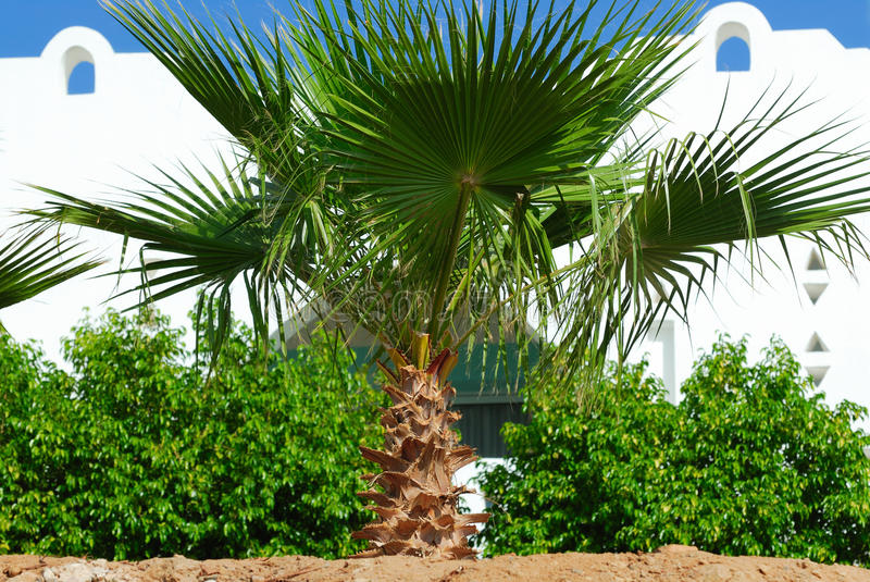 Download Palm tree stock photo. Image of color, summer, white - 17145664