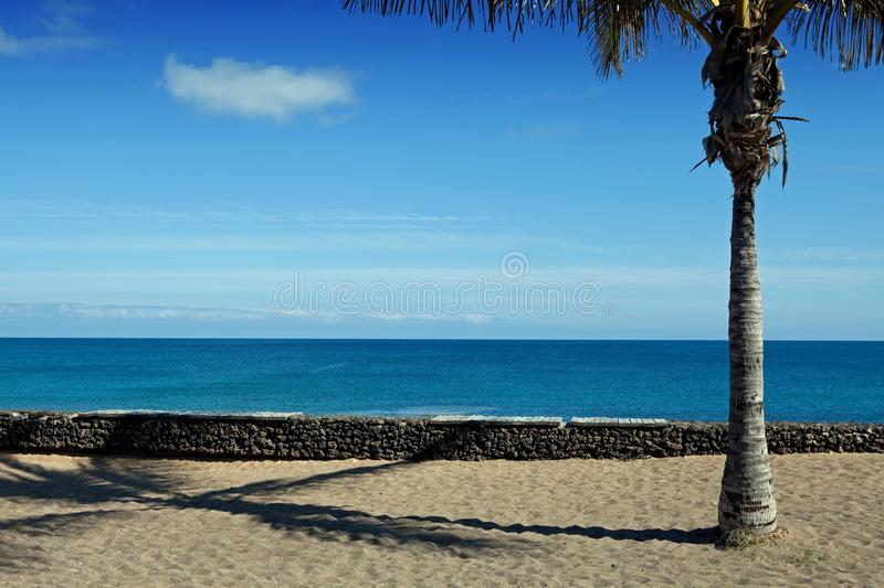 Download Palm tree stock photo. Image of sunny, coast, coconut - 17674674